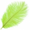 """Ostrich Drab Feathers 6-8"""" Premium Quality Lime Green"""